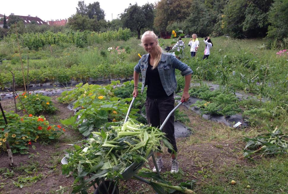 rapport om urbant landbruk